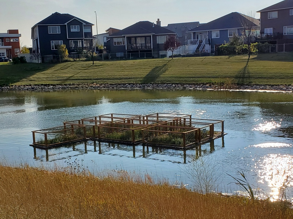Floating Islands removing Nutrients in Storm Water
